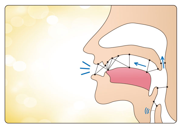 Points of articulation in the mouth and the different ways of releasing sounds.