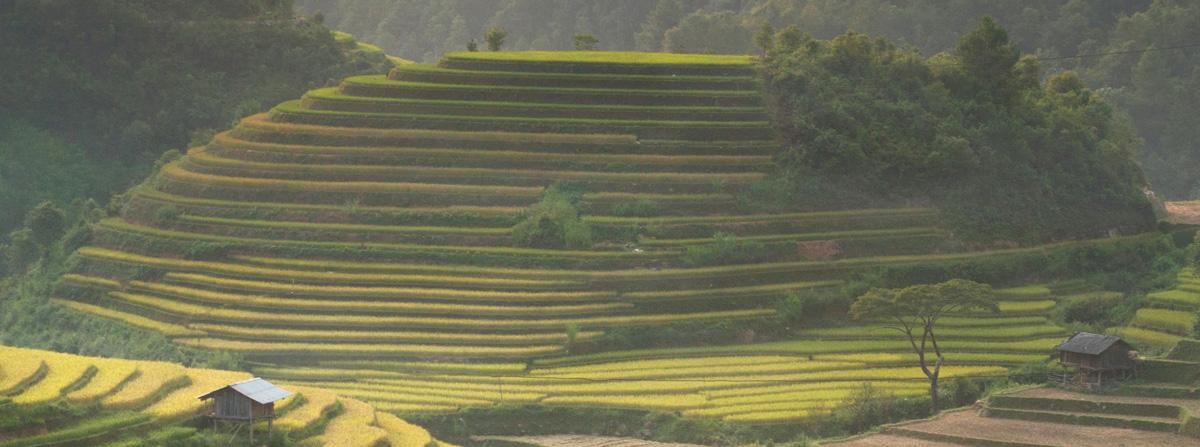 Terraces in Vietnam